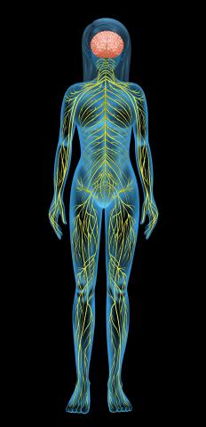 The central nervous system, part of the human body's nervous system, encompasses the brain and spinal cord.