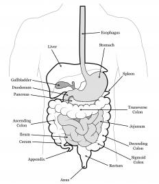 An anal polyp is an abnormal growth that lines the anus or colon.