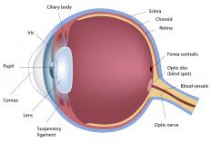 The retina at the back of the eye is examined with an ophthalmoscope.