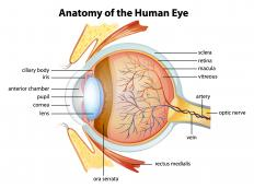 The anatomy of the human eye includes the cornea, retina, lens, pupil, optic nerve, and more.