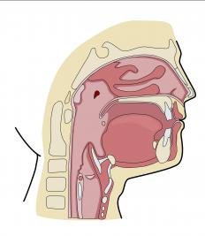 When the esophagus does not work as it should, people have trouble swallowing their food.