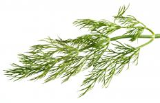 Dill is often used to garnish a bagel with lox.