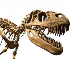 Dinosaurs are perhaps the most famous of the Jurassic animals.