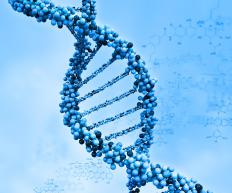 DNA takes the form of a double helix.