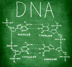 In DNA, cytosine pairs only with guanine.