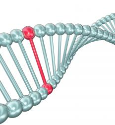 A point mutation affects a single nucleotide.