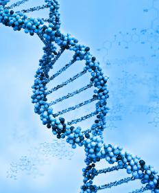 The formulas of protein synthesis are encoded in our DNA.