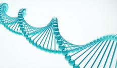 Gene sequencing is a process in which the individual base nucleotides in an organism's DNA are identified.