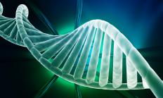 DNA is made of two nucleotide strands that are linked together due to hydrogen bonding and coiled around each other, forming the double-helix.