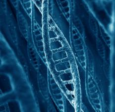 DNA cloning is one of three types of cloning.