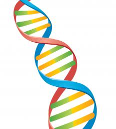 A representation of DNA, a type of polymer.