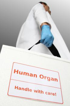 A cadaver may be used for organ harvesting or scientific research.
