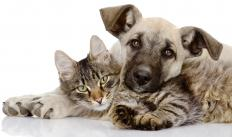 Pyrogenium may also be useful for treating various pet ailments.