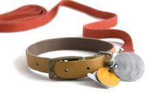 A dog's tags are typically worn on its collar.