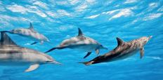 Dolphins are typically considered playful mammals.