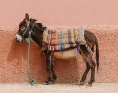 Donkeys may be used for transportation in Bulgaria.
