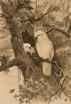 A lithograph of a bird in a tree.