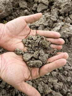 It can take years to amend hard clay-like soil.
