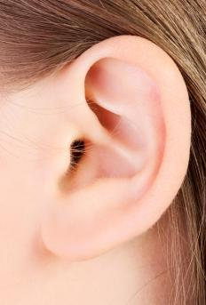 The outer ear contains elastic cartilage.