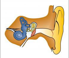 Ear plugs reduce the decibel level and pressure of sound, which helps to protect the ear drum.