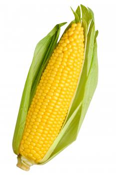 Corn is a type of monoecious imperfect flower.