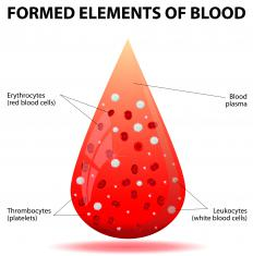Leukocytes are an important component of blood and a key player in the body's immune system.