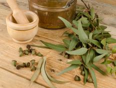 Eucalyptus is commonly found in many cough syrups and throat lozenges.