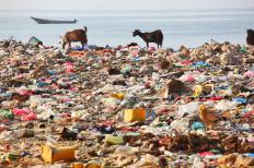 Animals are often allowed to graze at unsanitary landfills.