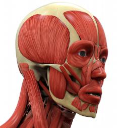 Parkinson's causes rigidity in the facial muscles.