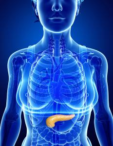 The pancreas gland plays a vital role in digestion and in insulin and glucagon production.
