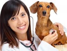 Medication from veterinarians can help prevent paw blisters.