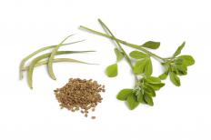 Fenugreek is an antipyretic herb.
