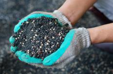 Fertilizing plants may help protect them from being damaged by frost.