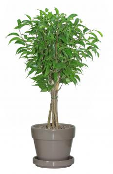 There are many small trees that grow well indoors.