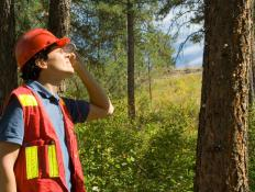 Clinometers may be used in the forestry profession.