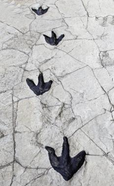 Fossilized footprints can reveal information about an extinct animal's behavior.