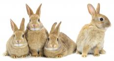 Fur ponchos made from real animals, such as rabbits, are more expensive than synthetic versions.