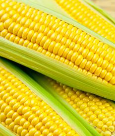 Baby corn is essentially the same type of corn that is on the cob.