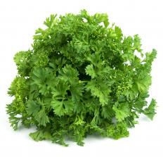 Fresh parsley is commonly used to garnish food.
