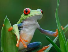 Frogs have different thermoregulatory mechanisms than humans.