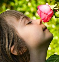 Chomoreceptors are sensory receptors that goven smell.