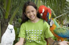 Parrots talk at different abilities based on their species, the individual bird, and the time their owner spends teaching them.