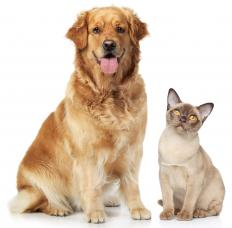 Pet dander can set the stage for an inner ear infection.