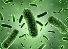 Probiotic supplements contain live active cultures of good bacteria used in functions of the human body.