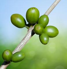 Chlorogenic acid can be found in green coffee beans.
