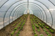 Unattached greenhouses receive significantly more sunlight than attached structures.