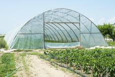 Greenhouses are occupied only by plants, and are not attached to homes.