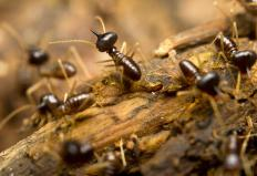 Termite infestations may cause severe damage to structures.