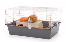 Preclinical studies may conduct tests on guinea pigs.