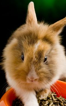 The pet food industry makes food for pets, such as pellets for rabbits.